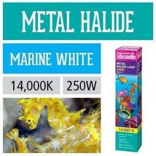 Arcadia Lampada HQI 250W Marine 14000K luce agli ioduri di metallo per acquario marino - AQI14K250