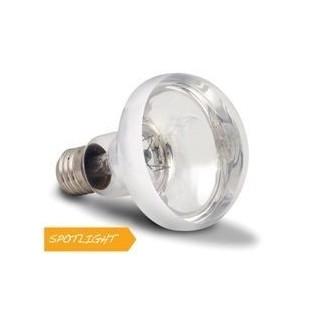 Arcadia Lampada Basking Solar Spotlight 50W luce a infrarossi riscaldante per rettili e terrari - SBS50