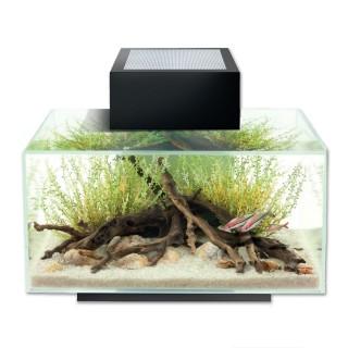 Askoll Fluval Edge 23L Led Acquario illuminato a LED con filtro a tripla azione completo di materiale filtrante BIANCO