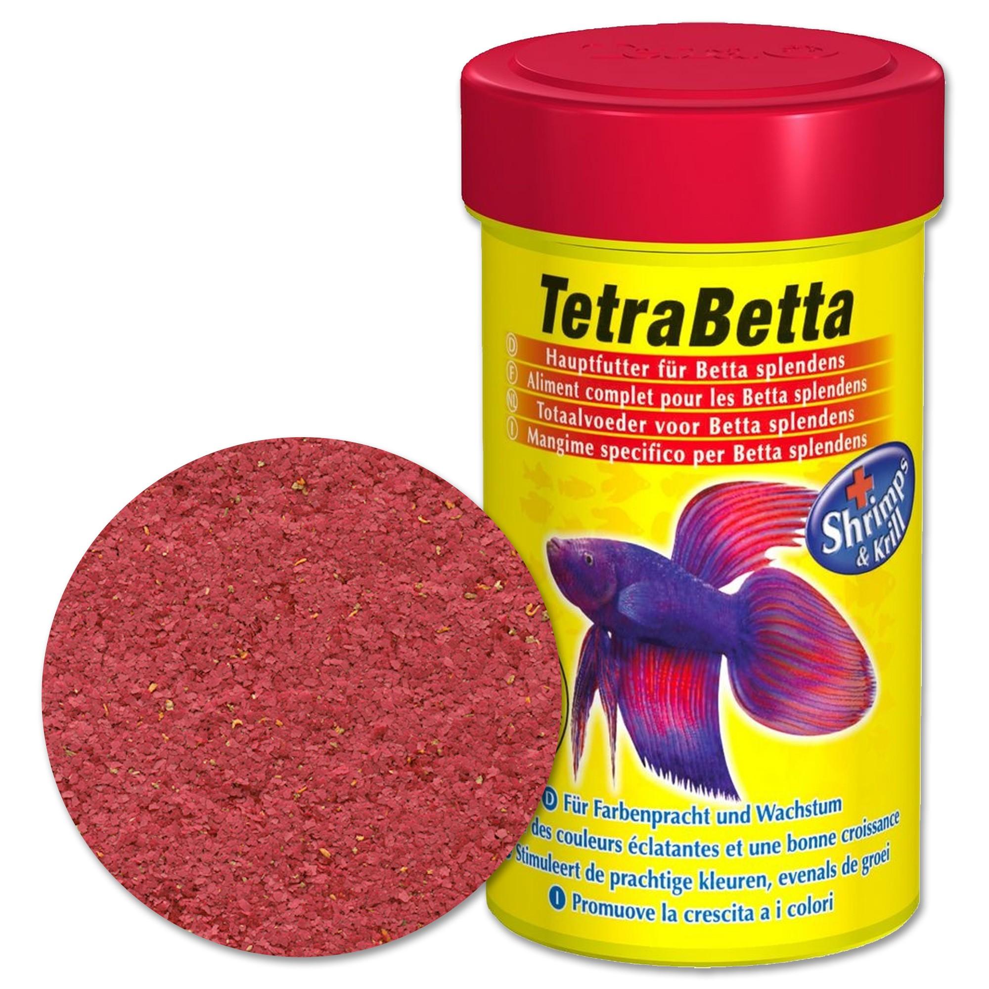 acquario per betta ~ reportage bettaday del 17 novembre 2011 ... - Allestimento Acquario Per Betta Splendens