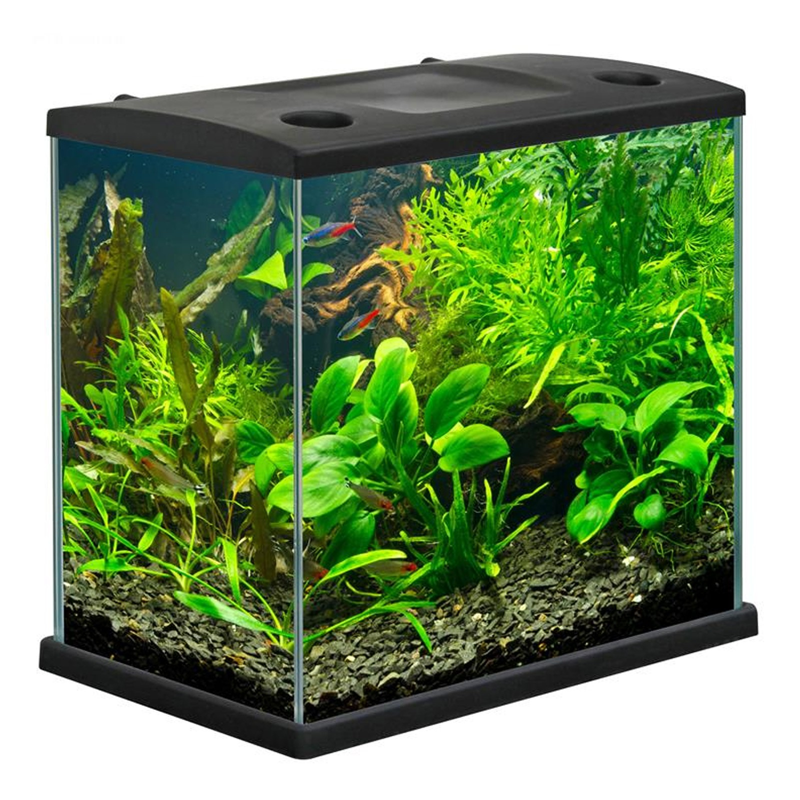 Acquario completo MTB Cleo Plus accessoriato 22.5 L Nero Per pesci rossi