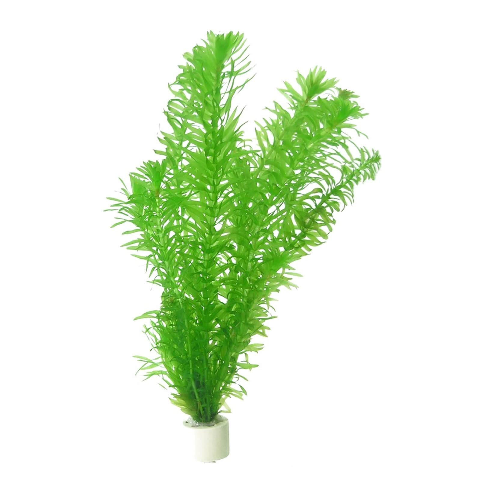Egeria densa Elodea pianta per acquario