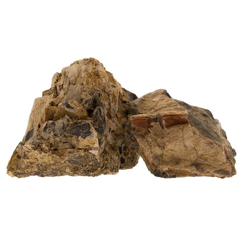 Roccia legno fossile per acquario