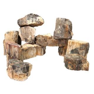 Roccia legno fossile esempio composizione acquario