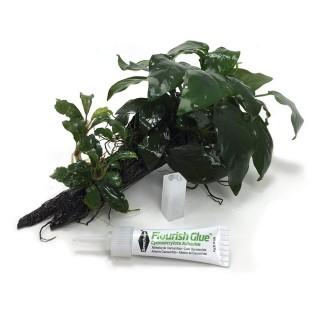Composizione piante e muschi