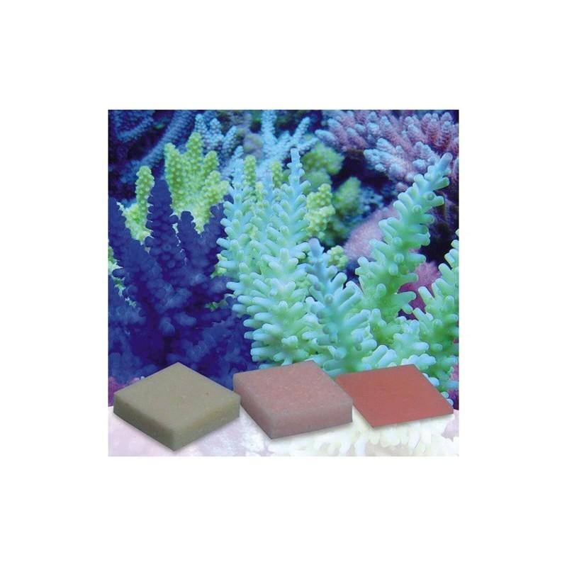 Korallen Zucht Automatic Elements Kaliumjodid Fluor Concentrato