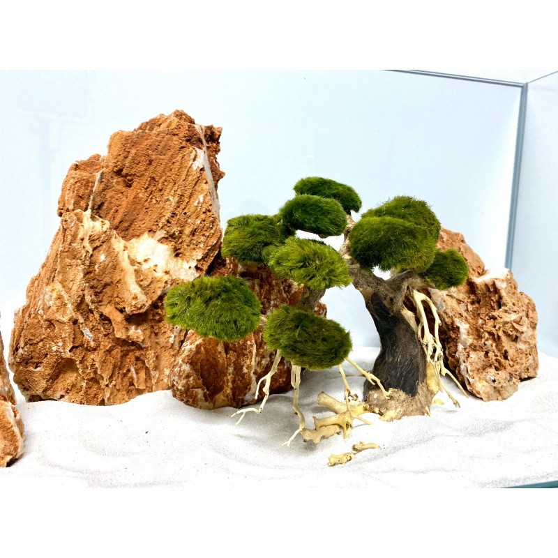 Bonsai per acquario allestito