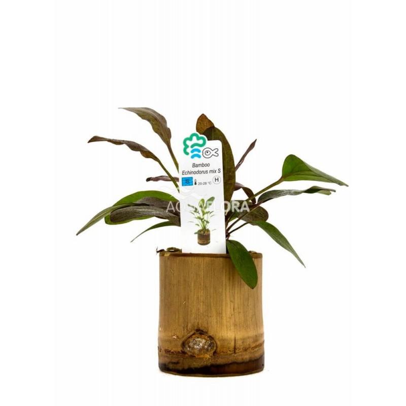Echinodorus Mix Bamboo pot S