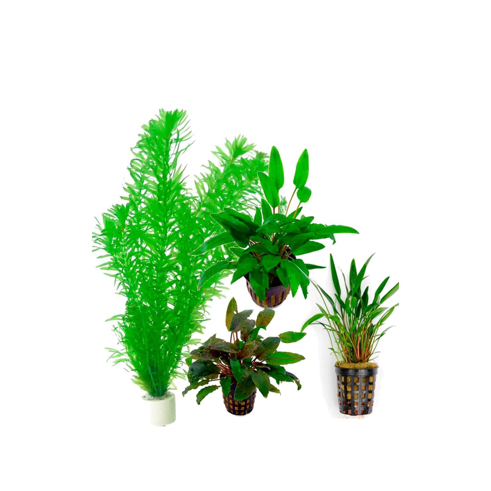 Assortimento piante facili per acquario 30 a 60 litri