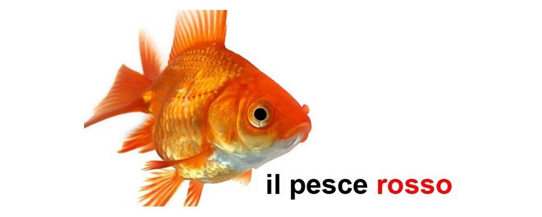 Pesce rosso: la cura e l'alimentazione