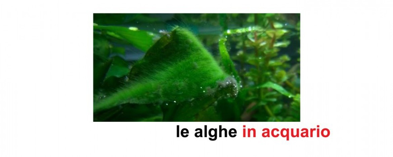 Le alghe in acquario: impariamo a conoscerle